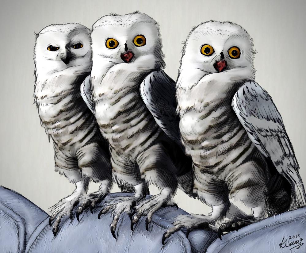 2015-05-01 owls copy
