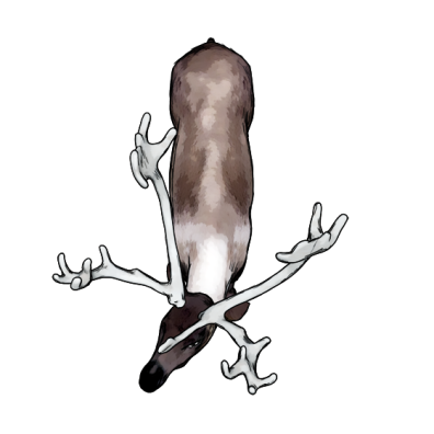 caribou_001